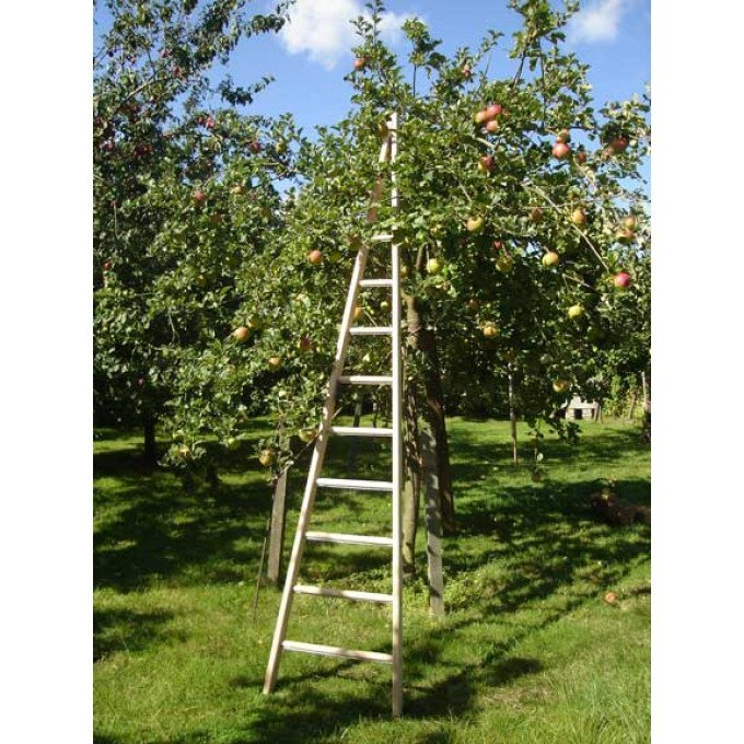 Wooden-Window-Cleaners-Pointer-Fruit-Picking
